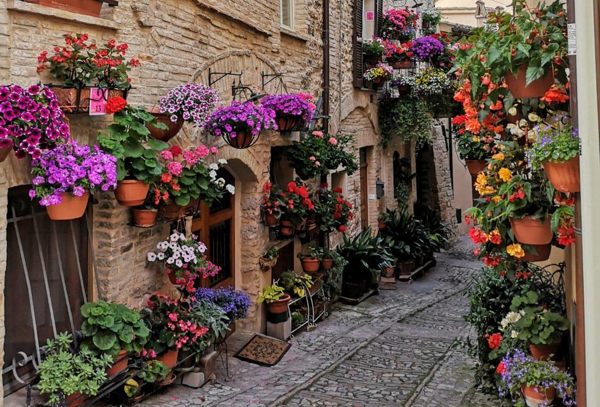 Il paese dei fiori, Spello
