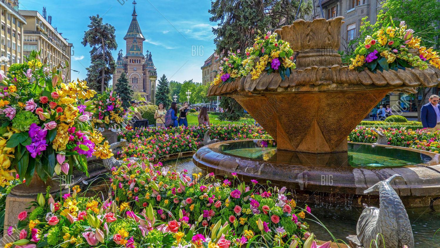Timisoara flower festival